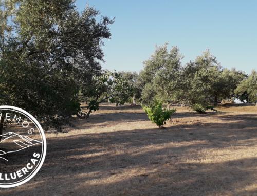 La Colonia agrícola de Cañamero como modelo de soberanía alimentaria